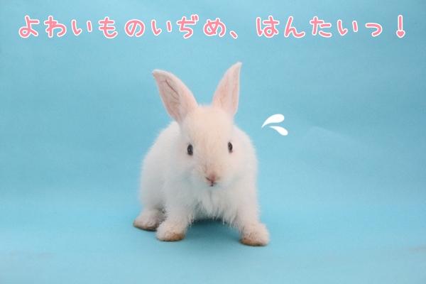 かわいい子ウサギ