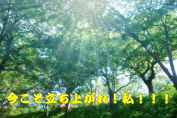 木々の間から太陽の光が差し込んでいる