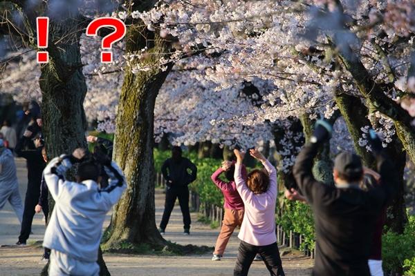 桜の木の下でラジオ体操をする人々